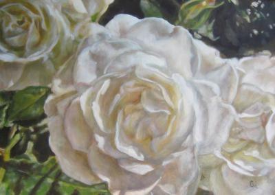 White Roses 4